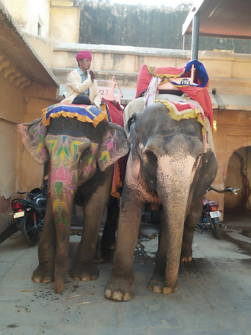 Elephants in Amer fort stable in Jaipur photographed by Shubhobroto Ghosh