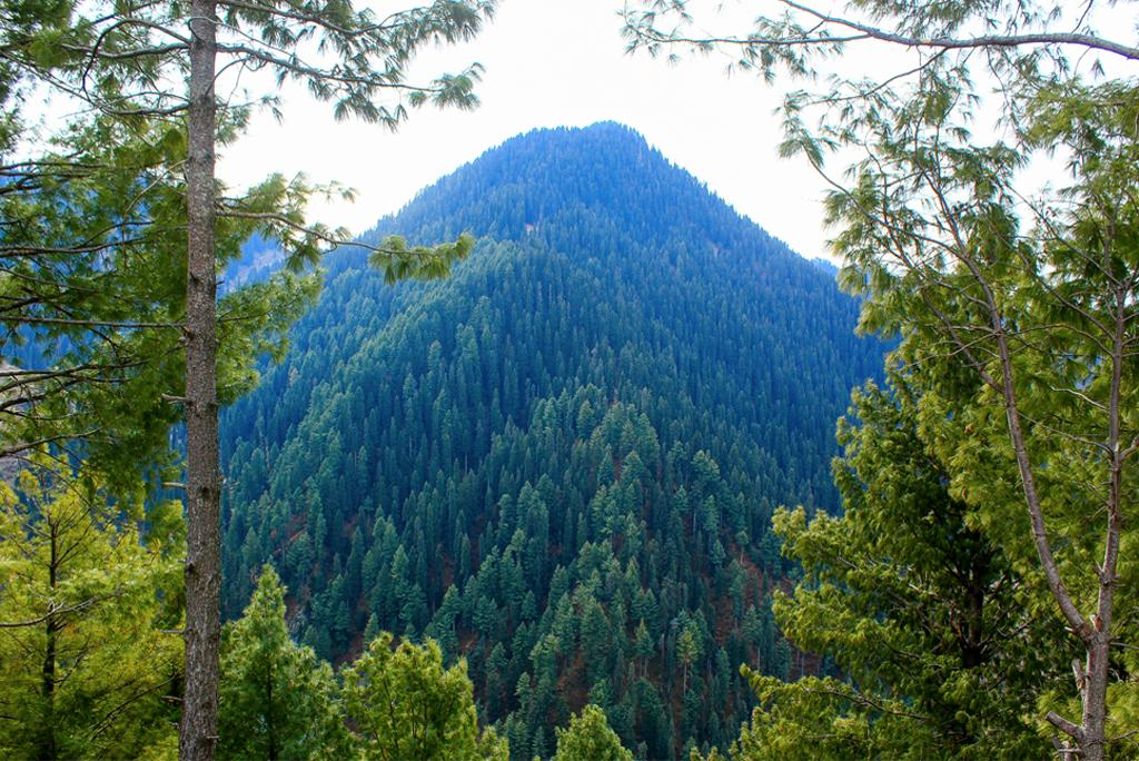 Which types of forests store the most carbon