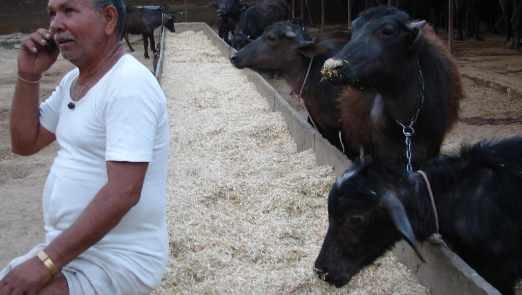 Handle with care: The dictum for using antibiotics in livestock. Photo: Ravleen Kaur / CSE