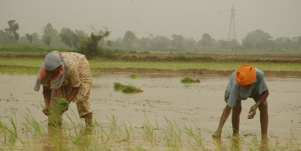 COVID-19 might just have saved Punjab's declining groundwater. Photo: Agnimirh Basu / CSE