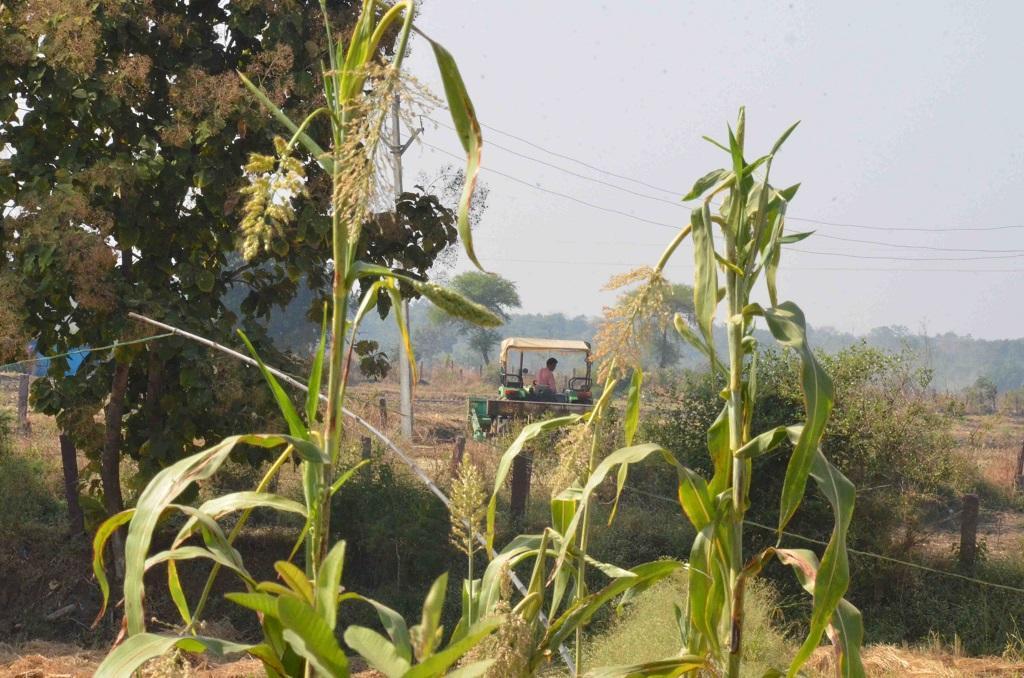 मध्यप्रदेश की राजधानी भोपाल से 53 किमी की दूरी पर बसे गांव बनखेड़ी। फोटो: राकेश कुमार मालवीय
