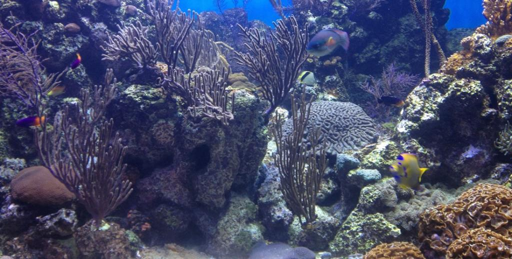 A Caribbean coral reef. Photo: Wikimedia Commons