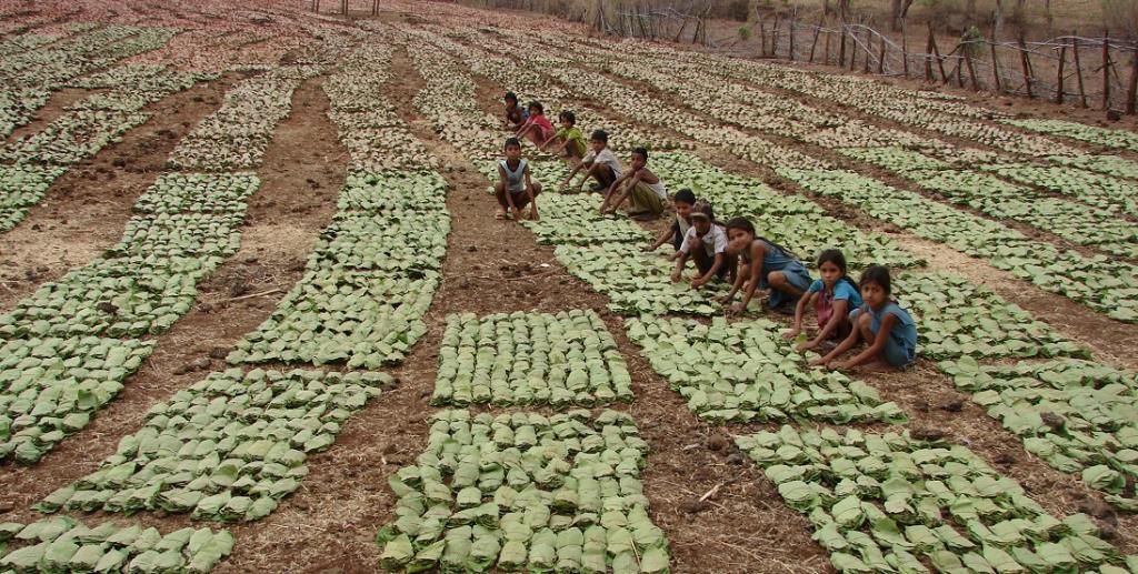 How FRA helped India's forest communities during COVID-19. Photo: Kumar Sambhav Shrivastava / CSE