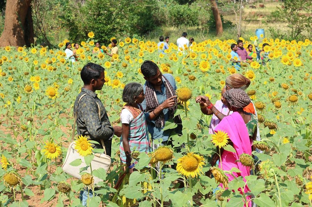 आंध्रप्रदेश के गांव मुलिगोडा में किसान पटि्टका सुलोचना का खेत। फोटो: सीएसई