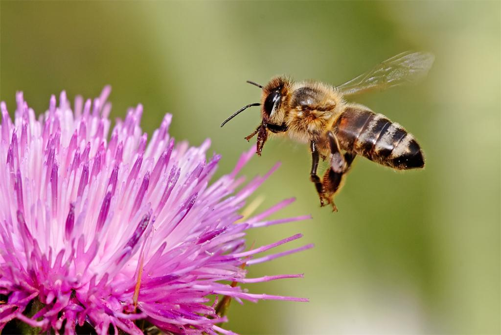 Researchers create first map of worldwide bee species