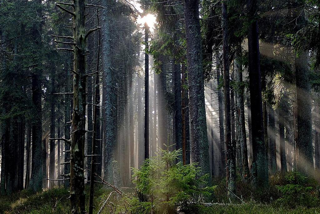 The cost of planting trees and protecting trees is coming in the way of fighting climate change