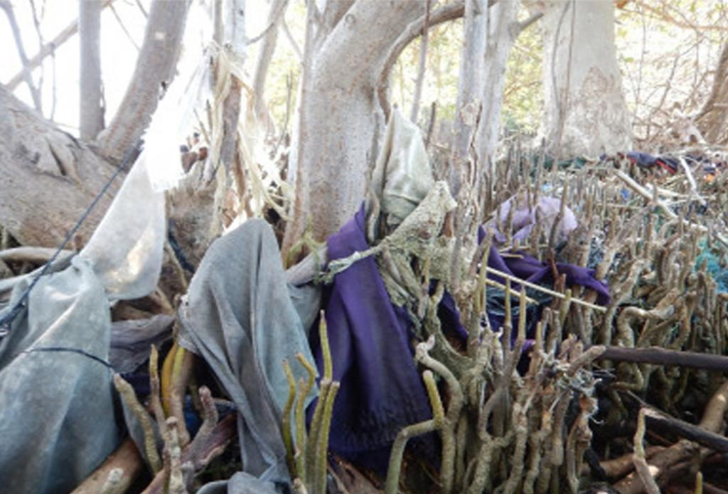 Mangrove forests are suffocating due to plastic waste