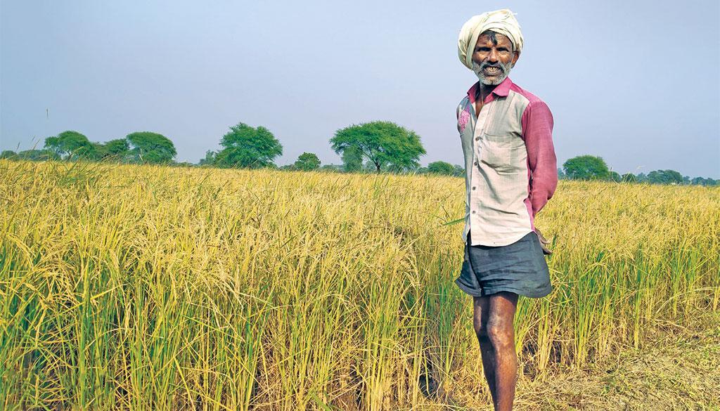 बांदा के कुलकुम्हारी गांव के किसान राममिलन ने बासमती की खेती में लगातार हो रहे घाटे को देखते हुए अगले साल से बासमती न उगाने का निर्णय लिया है