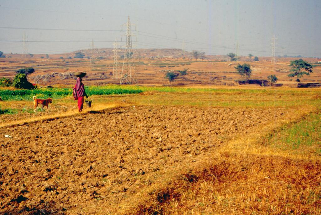 Climate resilient agriculture practices can help reduce hunger and poverty in the face of climate change. Photo: Surya Sen