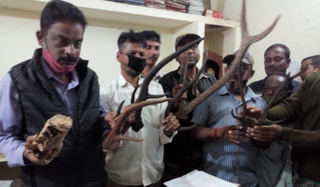 Wildlife parts, live chameleon seized in Odisha's Jajpur. Photo: Ashish Senapati