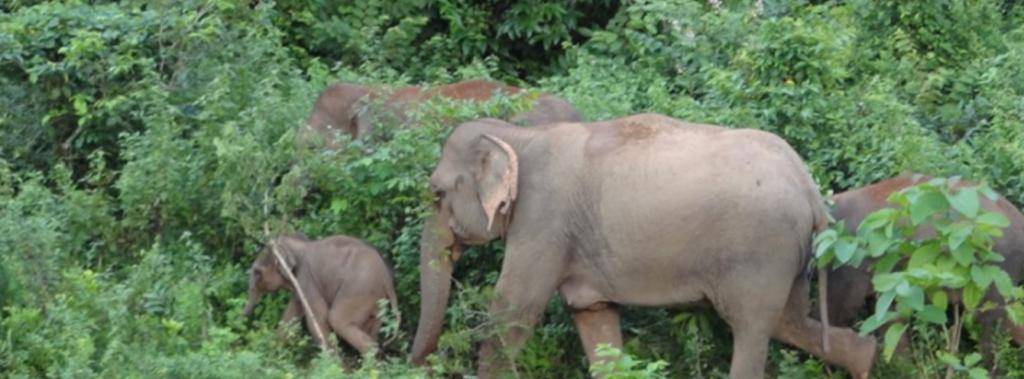 NGT's direction to notify Odisha's elephant corridors welcome, but more needs to be done. Photo: Karpagam Chelliah / CSE