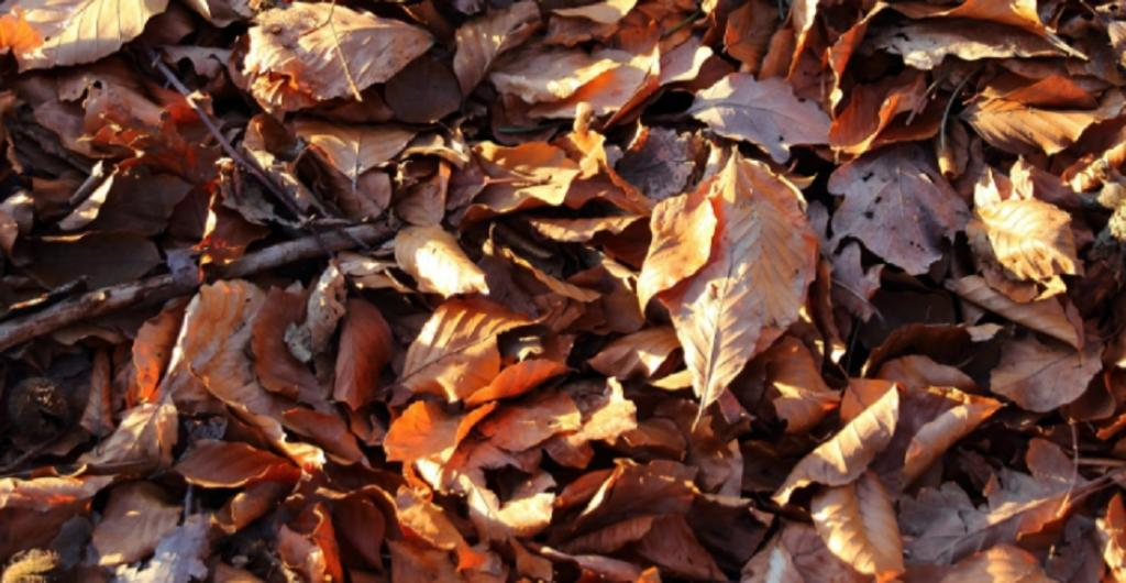 How the size and shape of dried leaves can turn small flames into colossal bushfires. Photo: Needpix