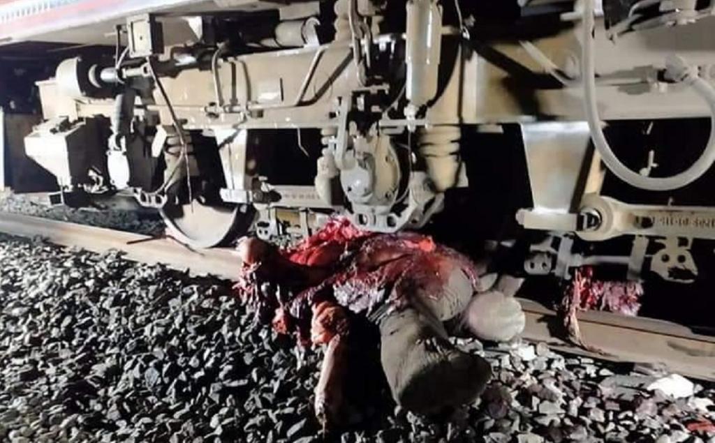 12-year-old elephant crushed by train in Odisha's Sambalpur. Photo: Ashis Senapati