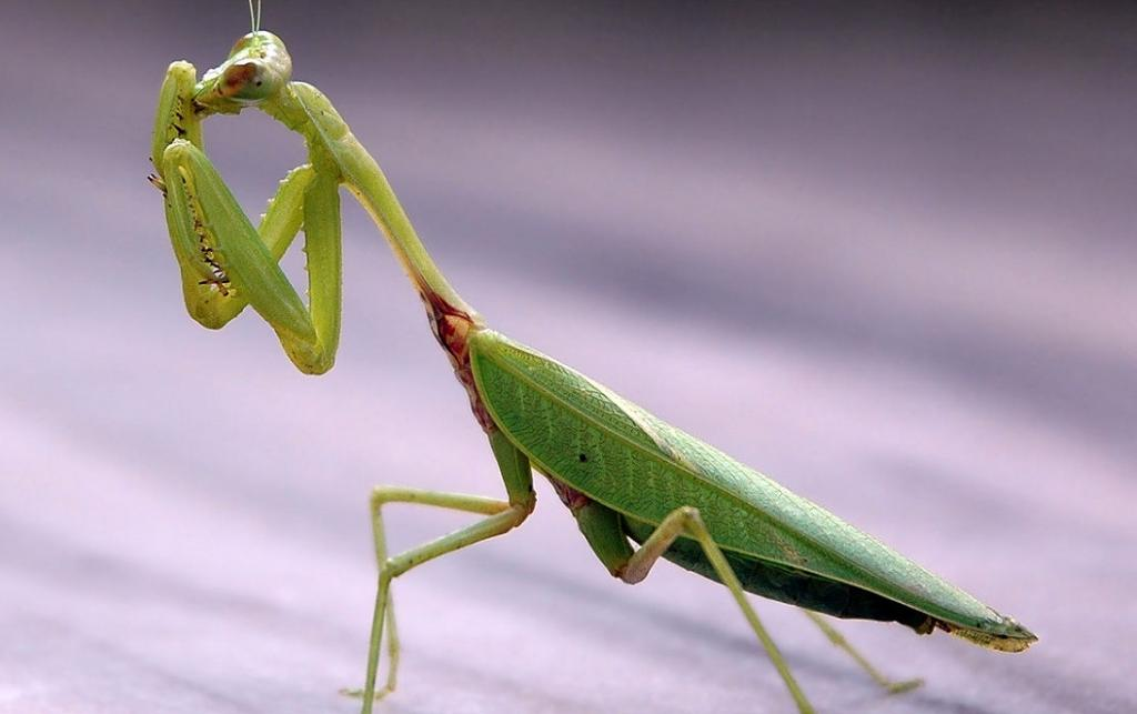 Humanity must prevent the insect apocalypse. Photo: Wikimedia Commons