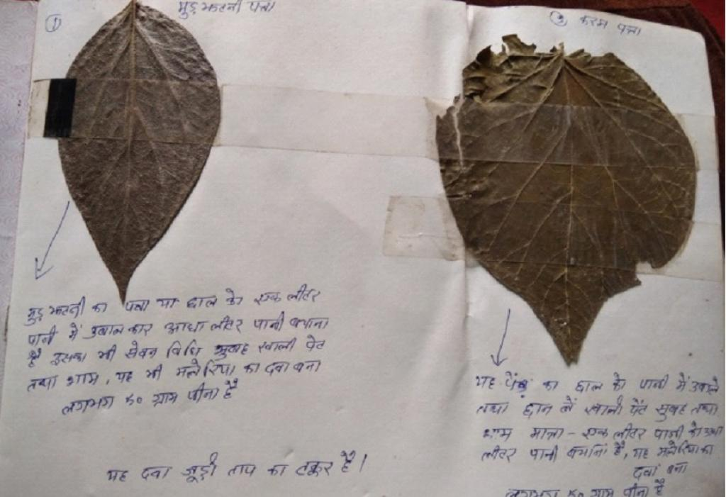 How the Adivasis of Jana in Jharkhand are trying to document the knowledge of ethnomedicine. This figure shows the leaves of 'Murjhatni' and 'Karam' and how they should be used to treat common illnesses. Photo: Author provided