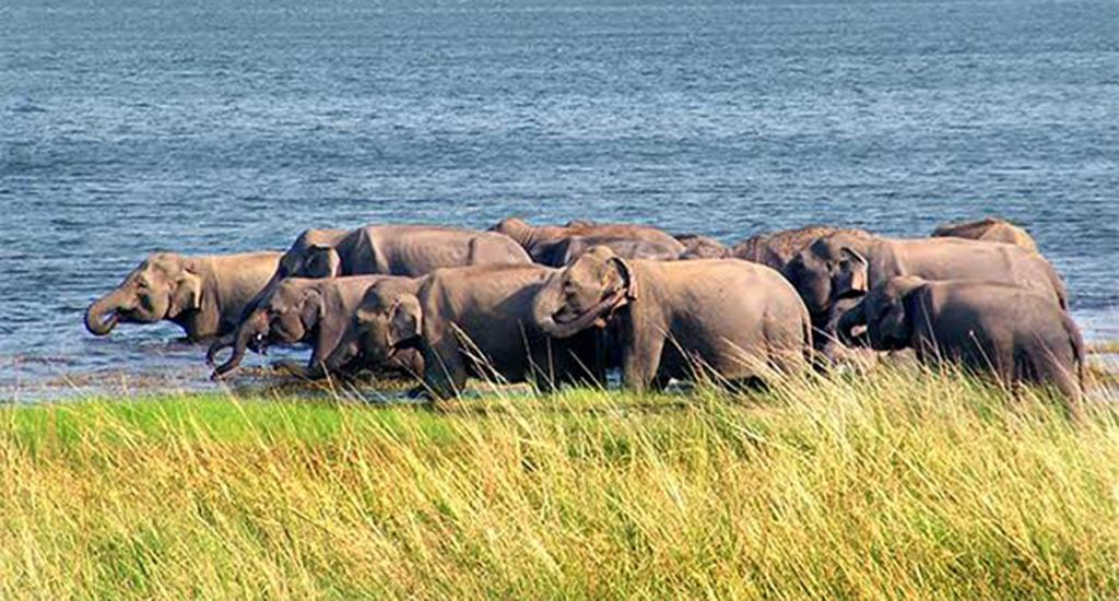"""Wild elephants often enter villages in search of food, and damage the paddy crops, vegetables, granaries, etc. But for the first time, they damaged the prawn farms in the Bahuda lake.  """"We had earlier submitted a memorandum to the forest department urging them to check wild elephant menace. However, the forest department failed to solve the problem,"""" alleged Baishaba Sahoo, a resident of Sorala village. Photo: Ashis Senapati"""