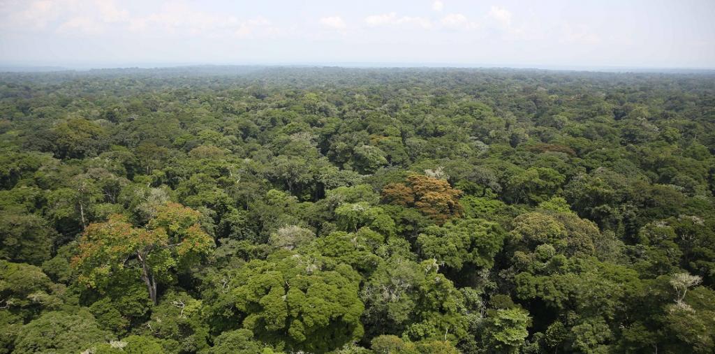 The Congo rainforest. Photo: Wikimedia Commons