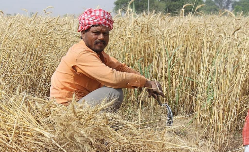 Is contract farming in India really worth it? Photo: pikist