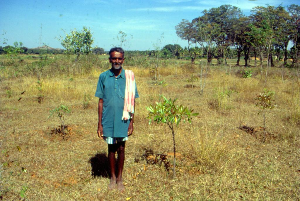Temperature rise is likely to show serious effects on crop yields. High temperatures may reduce crop duration and permit changes in photosynthesis. Photo: Ganesh Pangare