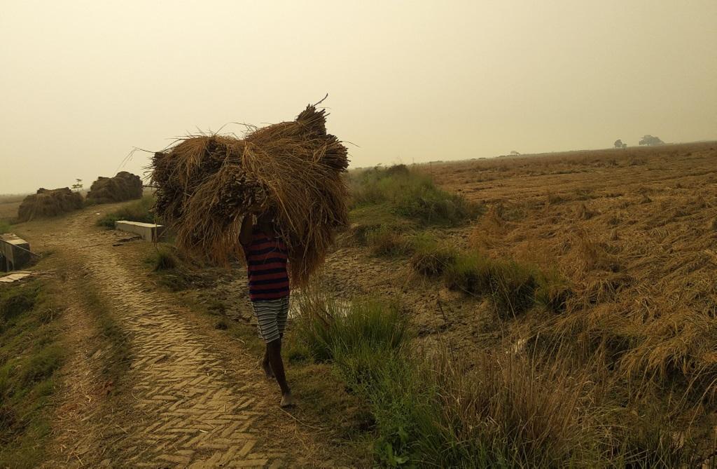 पटना के पालीगंज में धान ले जाता एक मजदूर। फ़ोटो: उमेश कुमार राय