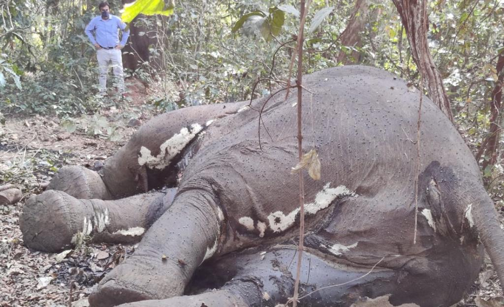 Tusker carcass with missing tusks found in Odisha's Mayurbhanj