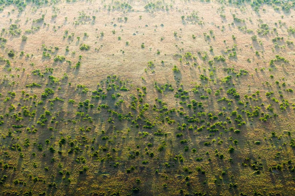 The Great Green Wall initiative led by the African Union to overcome challenges of desertification, land degradation and climate change is facing financial crunch.Photo: greatgreenwall.org