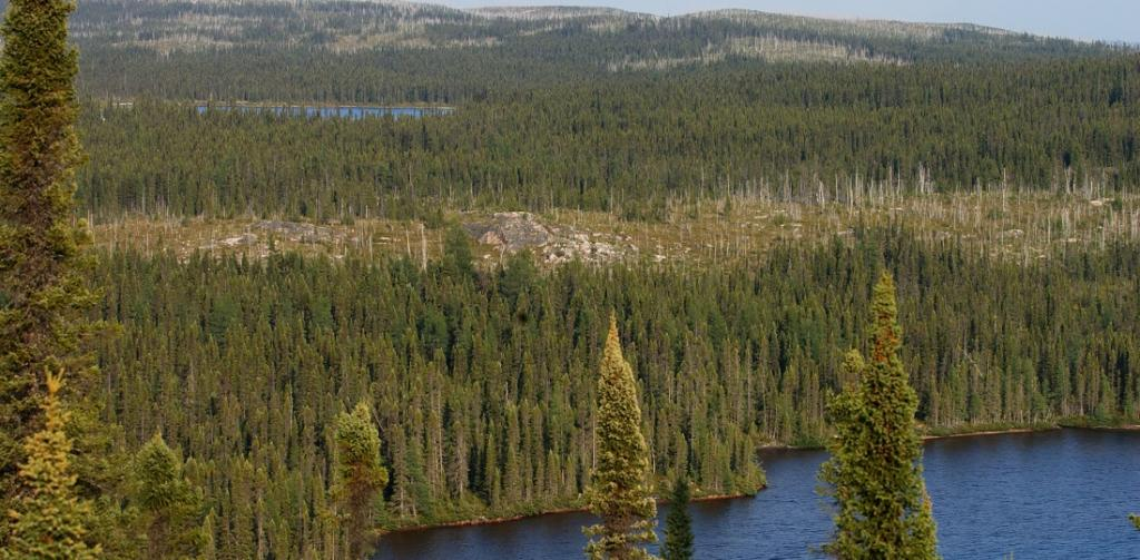 Huge implications for climate policy as new study confirms truth about land sink. Photo: Wikimedia Commons