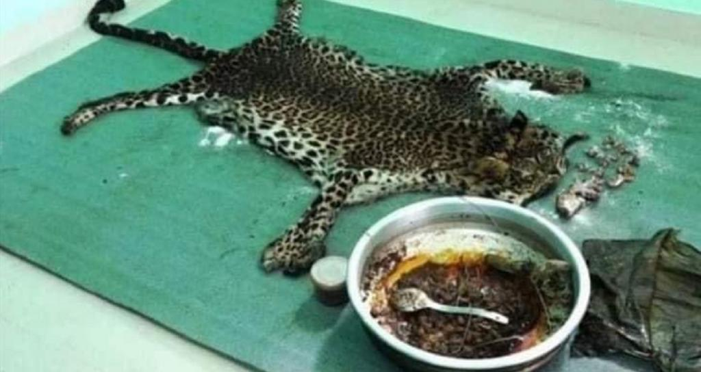 Global Eco Watch: Leopard killed, eaten in Idukki as revenge for sheep-killing