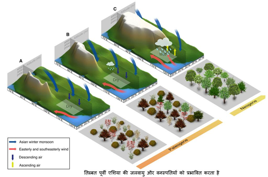 Science Advances, Simplified Tibet uplift stages, climate, and vegetation changes from the Paleogene to Neogene