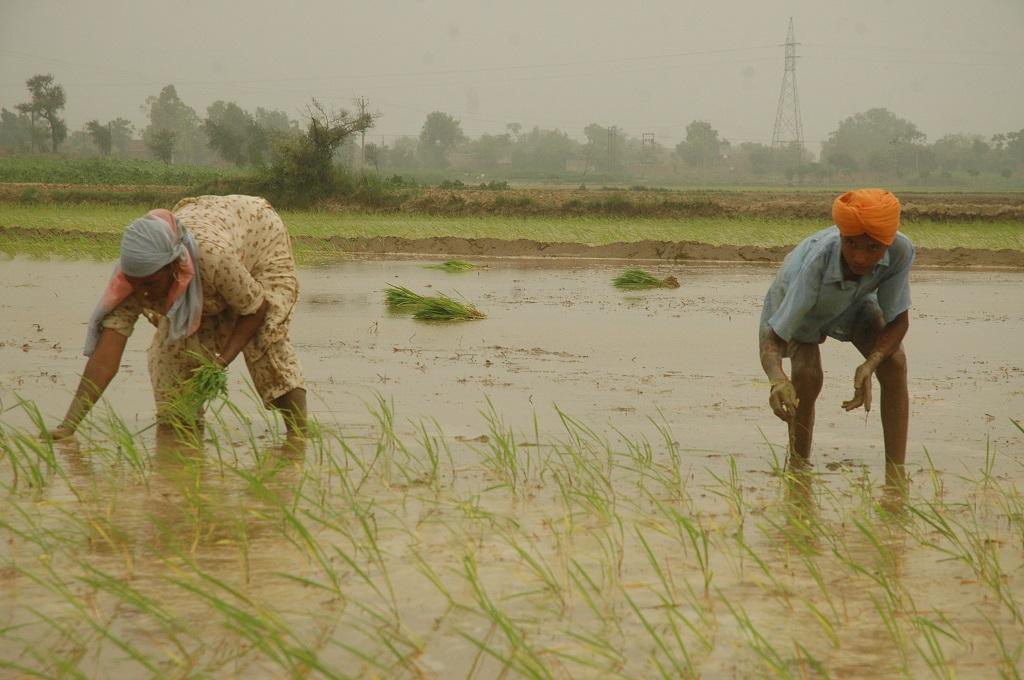 Photo: Agnimirh Basu/CSE
