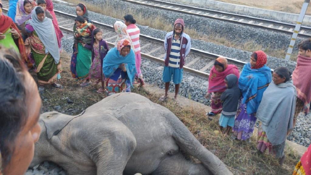 Goods train pilot booked in Odisha after speeding train kills two elephants