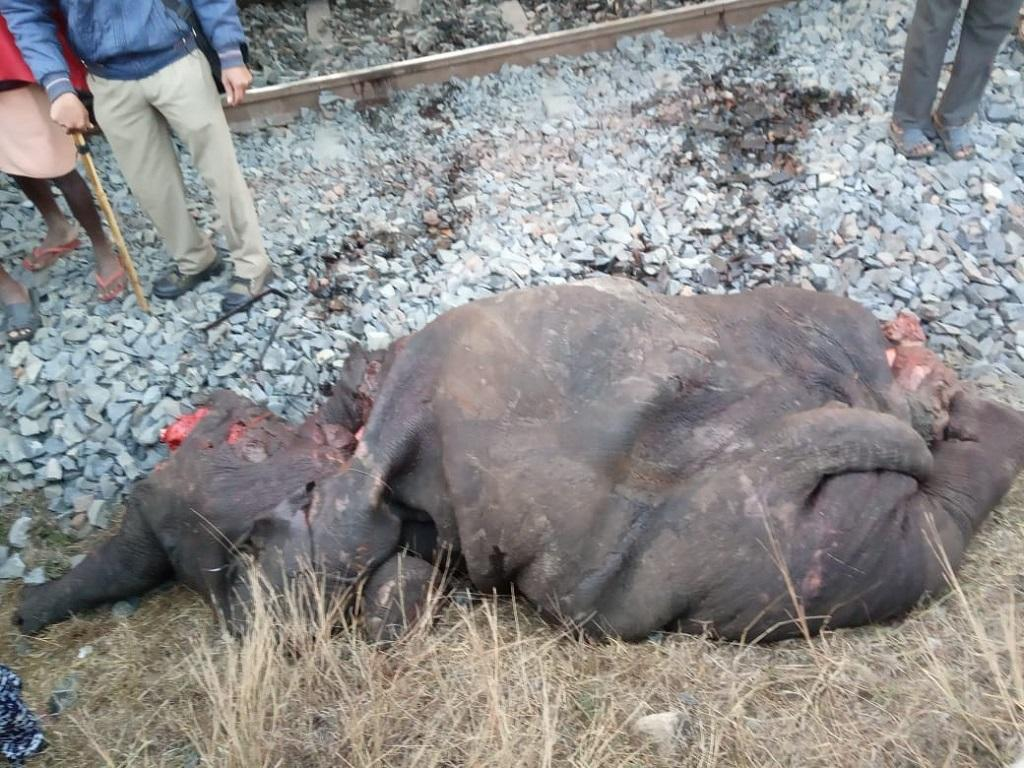 Two forest officials suspended over deaths of elephants in train accident. Photo: Ashis Senapati