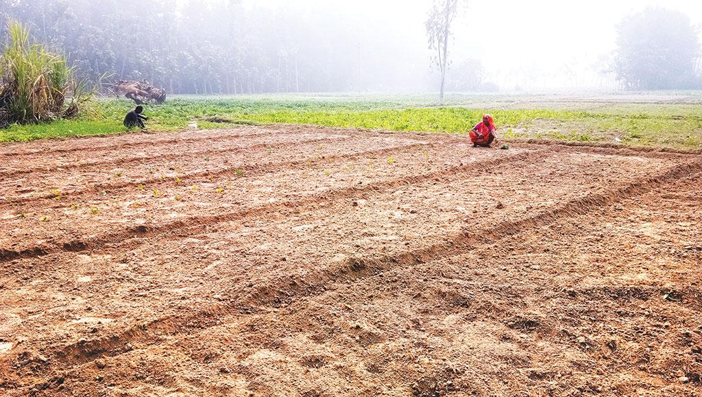 खाद्य सुरक्षा के लिए खतरा है मिट्टी की घटती गुणवत्ता