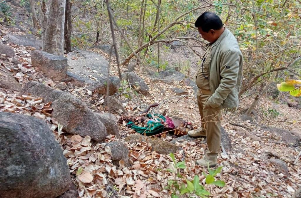 Woman killed by wild bear in Odisha's Nuapada