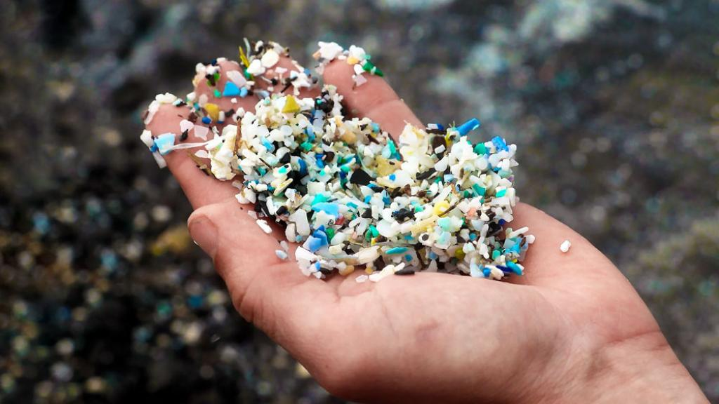 All types of sea creatures ingest microplastics; as they move up the food chain, the plastic inevitably end up in the human gut. Photo: Energy Industry Review