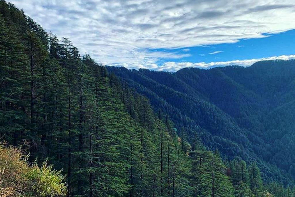 Seed production in forests is changing due to climate impacts