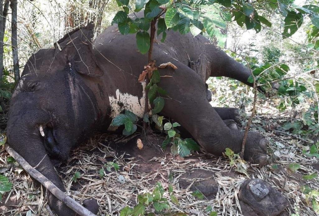 Low-ranking livestock inspector suspended in Odisha after death of 7 elephants. Photo: Ashis Senapati