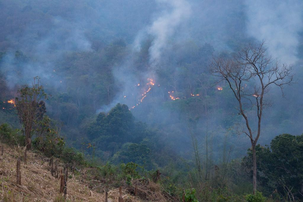 Representative image. Fire in Rayagada hills, Odisha. At least 5,291 forest fires were recorded in the state between February 22 and March 1, 2021. Photo:Flickr