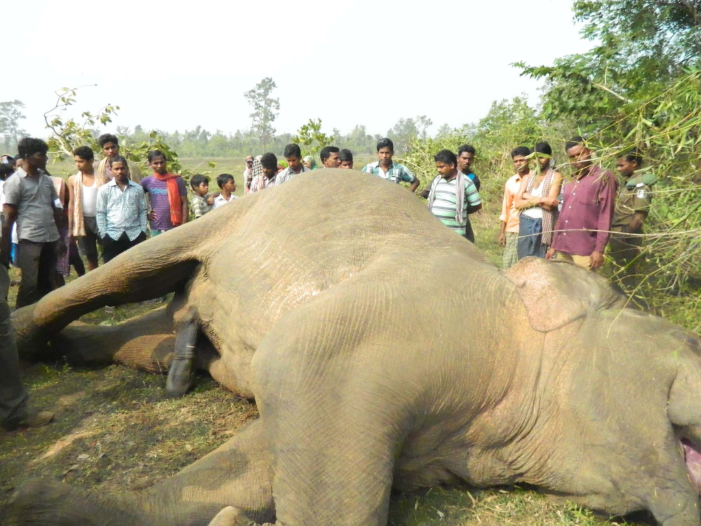 Forest officer suspended in Odisha's Sambalpur over death of six elephants in 2 years.