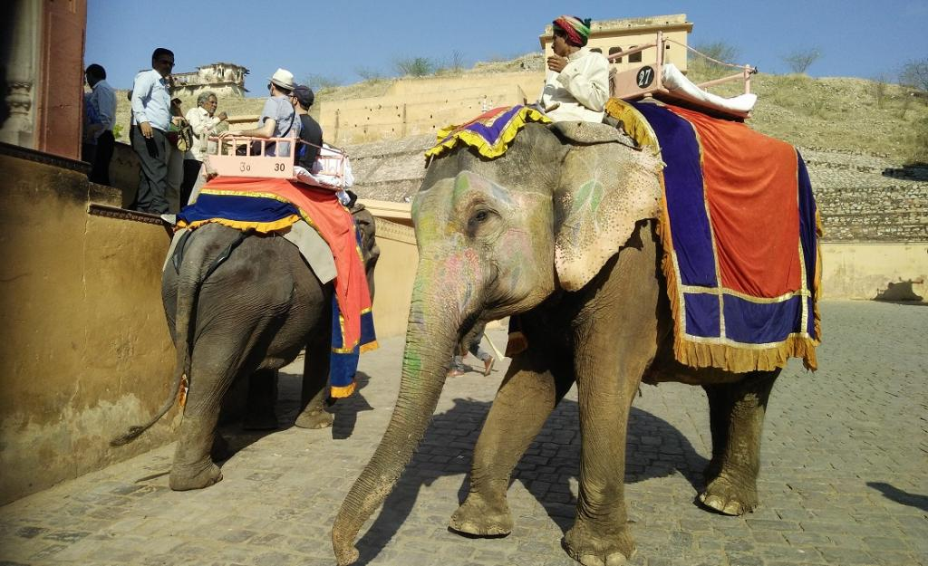 Elephants carrying tourists in Amer Fort. Photo: Shubhobroto Ghosh