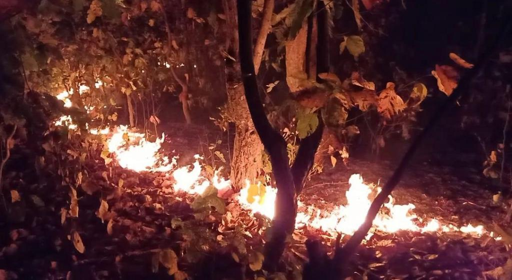 A burning forest in Similipal Tiger Reserve. Photo: Ashis Senapati