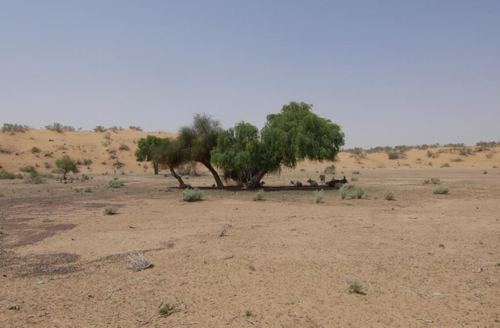 Desertification in India: How green revolution hastened the man-made disaster