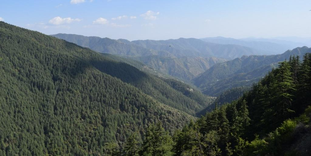 A forest in Himachal Pradesh. Photo: Wikimedia Commons