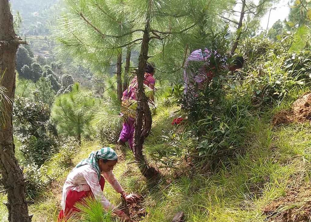 Forests and large-scale tree plantation zones absorb carbon dioxide from the atmosphere and help fight climate crisis.