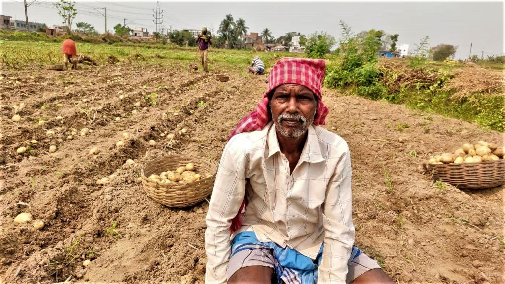 High seed price, low MSP: Double trouble for Bengal's potato farmers