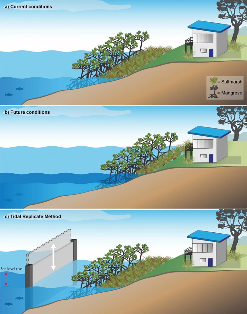 Photo : Scientific Reports, Showing saltmarsh and mangrove vegetation