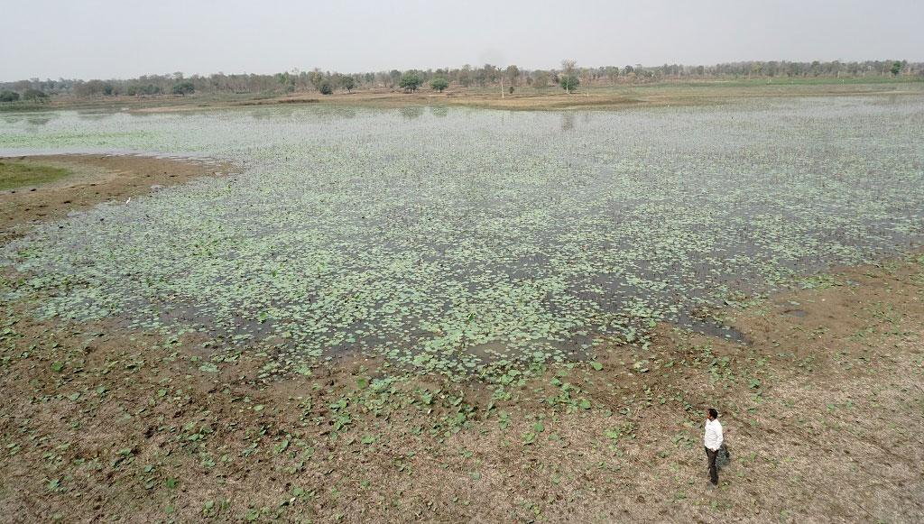 World water day: How a village in Maharastra turned a dying village into a birding destination. Photo: Ishan Kukreti