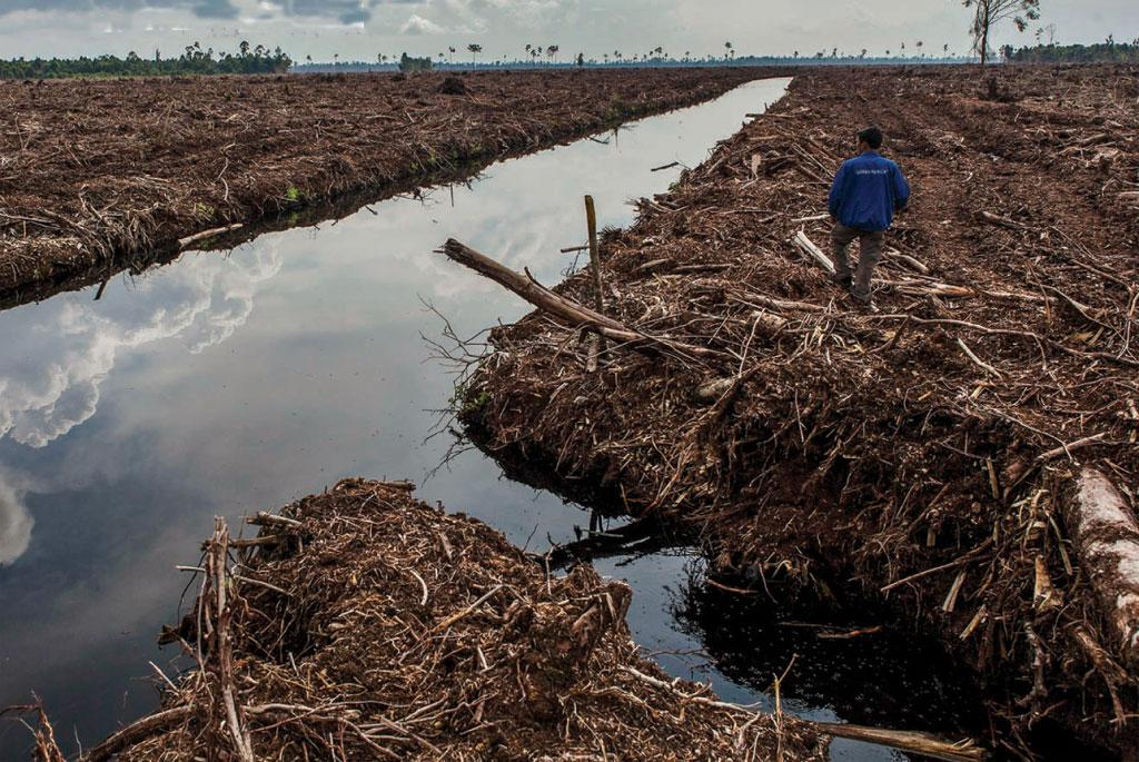 Deforestation, afforestation and water supply are closely related: research