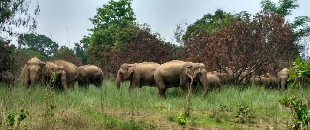 Odisha forest officials use recorded tiger growls to keep away elephants from villages. Photo: Ashis Senapati