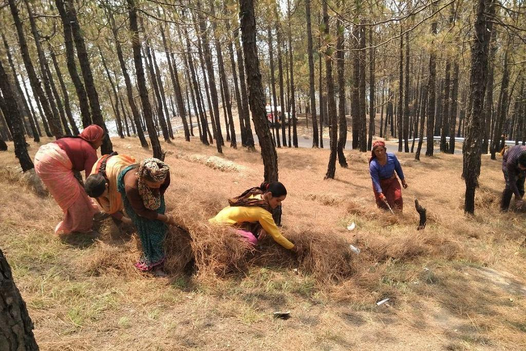 Forests more protected under indigenous communities, says report.